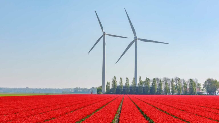 Netherlands – Ecommerce VAT package – Dutch government shared technical documents for the companies affected